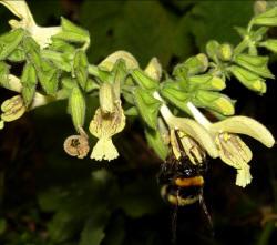 fiori gialli odorosi